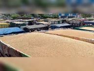 कोरोना संक्रमण का खतरा, समर्थन मूल्य पर गेहूं खरीदी में बढ़ी दिक्कतें|होशंगाबाद,Hoshangabad - Dainik Bhaskar