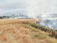 गनौली में किसान की तीन एकड़ गेहूं की फसल जली|छछरौली,Chacharauli - Dainik Bhaskar