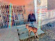 पशु चिकित्सालय खुलेंगे या नहीं; कोई आदेश नहीं, प्रदेश में हैं करीब 10 हजार कर्मचारी-अधिकारी|सीकर,Sikar - Dainik Bhaskar