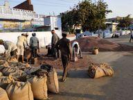 सोमवार को हुई बंपर आवक, हैफेड ने 134 गांवों के किसानों को किया 66.22 करोड़ का भुगतान|हिसार,Hisar - Dainik Bhaskar