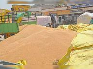 गेहूं खरीद के लिए 80 लाख बैग उपलब्ध, सोशल डिस्टेंसिंग के आधार पर जारी किए जाएंगे टोकन|श्रीगंंगानगर,Sriganganagar - Dainik Bhaskar