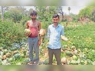 बीमित फसलों की क्षतिपूर्ति के लिए सर्वे कर प्रकरण भेज रहे हैं अफसर खैरागढ़,Khairagarh - Money Bhaskar