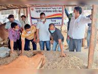 गौ शाला में गायों के लिए 32 हजार रुपए का डलवाया चारा|नागौर,Nagaur - Dainik Bhaskar