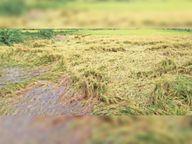 बालोद ब्लॉक में मई के 14 दिन में 185.8 मिमी बारिश|बालोद,Balod - Dainik Bhaskar