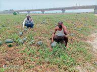 लॉकडाउन में तरबूज बेकार; प्रति एकड़ 1 लाख का मुनाफा दो साल से बंद, लागत के 40 हजार रु. भी नहीं निकल रहे|सहरसा,Saharsa - Dainik Bhaskar