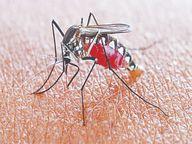 वायरल-डेंगू; रोज अस्पताल पहुंच रहे 15-20 बच्चे, अब बेड बढ़ाएंगे|इंदौर,Indore - Money Bhaskar
