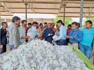 समर्थन मूल्य से ज्यादा रहा कपास का भाव|सेंधवा,Sendhwa - Money Bhaskar