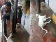 कुत्र्याने बाइकचे सीट फाडल्याने तरुणाने लोखंडाच्या रॉडने मारुन-मारुन केली हत्या, व्हिडिओ व्हायरल झाल्यानंतर आरोपी अटकेत|मुंबई,Mumbai - Divya Marathi