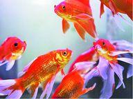 માછલીને તરસ લાગે?|કળશ,Kalash - Divya Bhaskar
