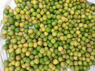રાજુલા પંથકમાં કોરોના કાળમાં નાળિયેર અને લીંબુની માંગ વધતા ભાવમાં ધરખમ વધારો|અમરેલી,Amreli - Divya Bhaskar