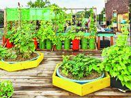 ઘર નાનું હોય કે મોટું, બનાવી શકાય છે... સુંદર ટેરેસ ગાર્ડન|મધુરિમા,Madhurima - Divya Bhaskar