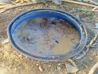 500 लीटर कच्ची शराब जब्त, 15 क्विंटल लहान नष्ट किया|सागर,Sagar - Dainik Bhaskar