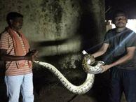 6 फीट का अजगर और 7 फीट का मगरमच्छ देख सहम गए लोग; घंटों मशक्कत के बाद किया गया रेस्क्यू जगदलपुर,Jagdalpur - Money Bhaskar
