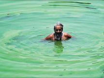 बनारस में सीवर के पानी और केमिकल के कारण हरा हो रहा गंगा का पानी; तेजी से बढ़ रहा शैवाल|देश,National - Dainik Bhaskar