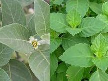 कारोना की अगली लहर से बचाने के लिए वनविभाग 16 लाख आयुर्वेद पौधे बांटेगा, घर-घर चलाएगा औषधि अभियान|बांसवाड़ा,Banswara - Dainik Bhaskar