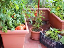 घर में जगह न हो तो छत या खिड़की की जगह भी बागवानी के लिए पर्याप्त, क्यारियों के बजाय गमलों में उगाएं फल और सब्जियां लाइफस्टाइल,Lifestyle - Dainik Bhaskar