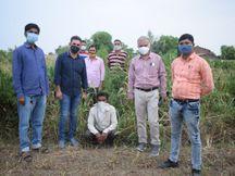 આણંદ SOG પોલીસે ખંભાતના દહેડા ગામમાંથી 82 લાખની કિંમતના ગાંજાના લીલા છોડ ઝડપ્યા|આણંદ,Anand - Divya Bhaskar
