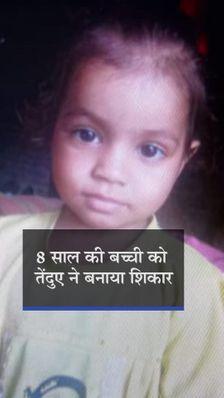 पिता की गोद से बेटी को छीन ले गया तेंदुआ, घर से 300 मीटर दूर सिर्फ सिर मिला
