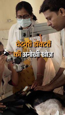 डॉग के खून से बनाई आंख की झिल्ली, अब तक 50 कुत्तों का ऑपरेशन; इसी यूनिवर्सिटी को मेनका गांधी ने घटिया कहा था
