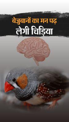 वैज्ञानिकों को चिड़िया के ब्रेन सिग्नल पढ़ने में कामयाबी मिली, इससे बोल न पाने वाले इंसानों के मन की बात समझी जा सकेगी