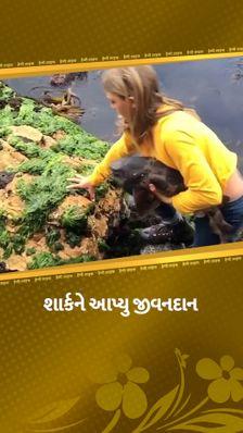 ઓસ્ટ્રેલિયામાં 11 વર્ષની બિલીએ શાર્ક માછલીનો જીવ બચાવ્યો, ડર્યા વગર કિનારે ફંસાયેલી શાર્કને પાણીમાં મુક્ત કરી