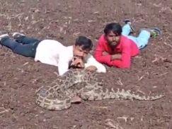 ઘોઘાના મોટા ખોખરામાં અજગર સાથે બે શખ્સોને વીડિયો સેશન કરવું પડ્યું ભારે|ભાવનગર,Bhavnagar - Divya Bhaskar