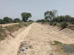 આણંદ જિલ્લામાં ચાલુ વર્ષે બાજરીનું અઢળક વાવેતર, પાણીના અભાવે ખેડૂતોની હાલક કફોડી|આણંદ,Anand - Divya Bhaskar