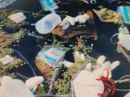 અંકલેશ્વરની અમરાવતી નદીમાં બાયો મેડીકલ વેસ્ટ ઠાલવવામાં આવ્યો, પર્યાવરણ પ્રેમીઓ દ્વારા કડક કાર્યવાહી કરવા માંગ ભરૂચ,Bharuch - Divya Bhaskar