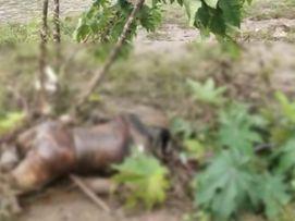 जहां से 3 दिन पहले लौट आई थी रेस्क्यू टीम वही ग्रामीणों को झाड़ियों में मिला शव, ग्रामीण बोले- होमगार्ड के जवानों ने नहीं की थी छानबीन छिंदवाड़ा,Chhindwara - Money Bhaskar