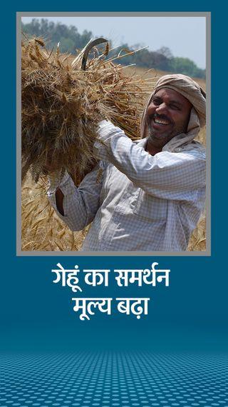 किसान बिलों पर हंगामे के बीच गेहूं के समर्थन मूल्य में 50 रुपए, चना और सरसों में 225 रुपए प्रति क्विंटल का इजाफा - देश - Dainik Bhaskar