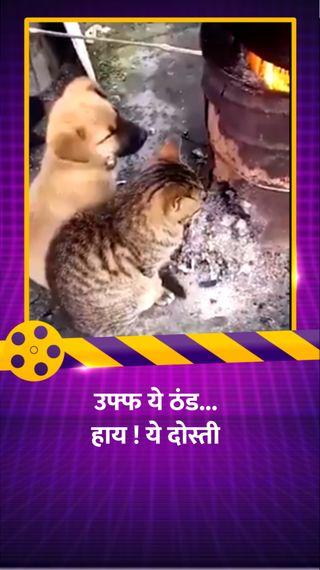 कुत्ता और बिल्ली एक-साथ भट्टी के पास बैठकर सेंक रहे थे आग, जावेद अख्तर ने शेयर किया वीडियो - बॉलीवुड - Dainik Bhaskar
