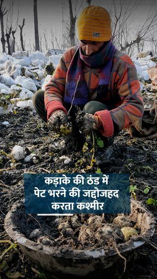 जमी हुई डल झील की बर्फ तोड़कर खेतों में पहुंचते हैं, फिर फ्लोटिंग बाजार में बेचते हैं - ओरिजिनल - Dainik Bhaskar