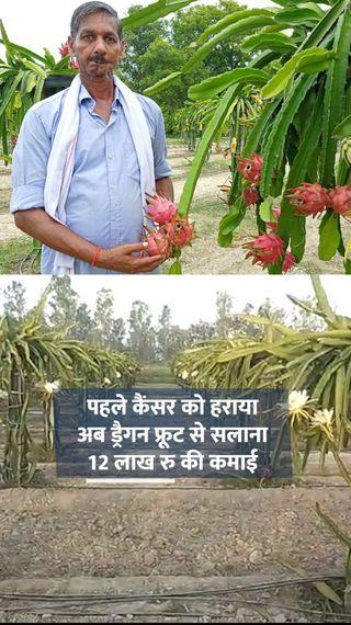 पैसों की कमी के चलते पढ़ाई छोड़नी पड़ी; फिर कैंसर हुआ तो कर्ज लेना पड़ा, अब ड्रैगन फ्रूट और सब्जियों की खेती से 10 लाख का बिजनेस - ओरिजिनल - Dainik Bhaskar
