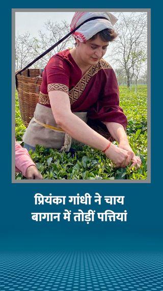 प्रियंका ने चाय बागान में मजदूरों के साथ पत्तियां तोड़ीं; कहा- गृहिणियों को 2 हजार महीना देंगे और ये वादा नहीं, गारंटी है - देश - Dainik Bhaskar