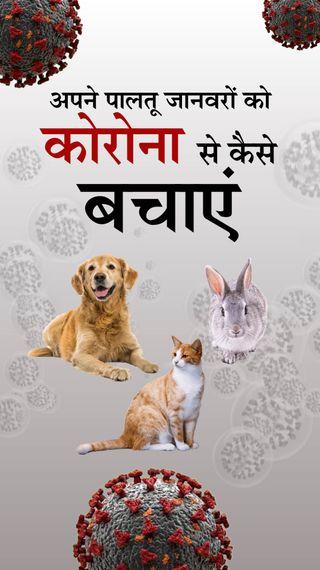 घरों में संक्रमित इंसानों से पालतू जानवरों को भी कोरोना का डर, जानिए पशु वैज्ञानिकों ने आपके कुत्ते-बिल्ली को बचाने के लिए क्या सलाह दी - ज़रुरत की खबर - Dainik Bhaskar