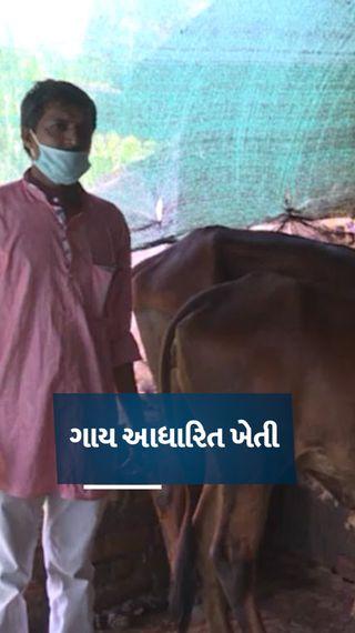 સુરત જિલ્લામાં ખેડૂતે પ્રાકૃતિક ખેતી શરૂ કરી, ખાતર-રાસાયણિક દવાનો ખર્ચ બચાવીને વીઘે 70 હજારનો ચોખ્ખો નફો મેળવ્યો - ઓરિજિનલ - Gujarati News