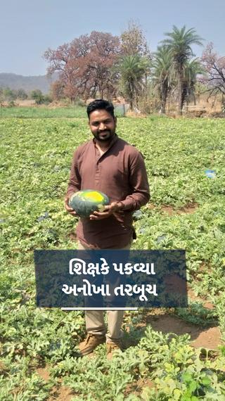 છોટાઉદેપુરના પ્રગતિશિલ ખેડૂતે બહારથી લીલા અને અંદરથી પીળા નીકળતા તરબૂચની ખેતી કરી, 4.5 એકર જમીનમાં 9 લાખની આવક - ઓરિજિનલ - Divya Bhaskar