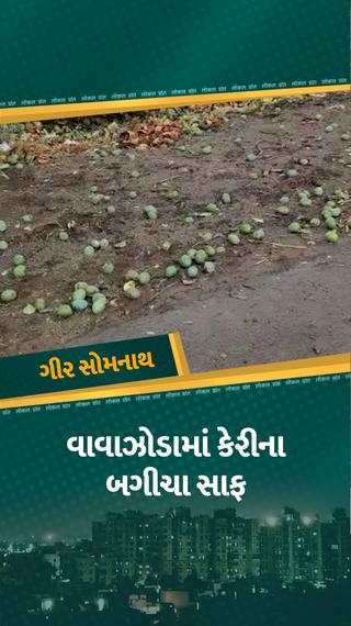 તાઉ-તે વાવાઝોડાએ આંબાના બગીચા સાફ કરી નાખ્યા, ખેતરોમાં કેરીના પથારા, 90 ટકા પાક ખરી ગયો - મારું ગુજરાત - Divya Bhaskar