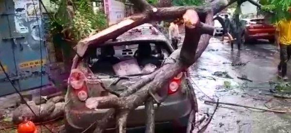 मुंबई के चेंबूर इलाके के एक कार पर गिरा पेड़।
