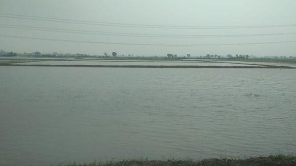 पानी से लबालब गांव के छह तालाबों में एक। इन तालाबों के बूते जखनी अब बुंदेलखंड में सबसे ज्यादा धान उगाने वाले गांवों में शामिल हो गया है।