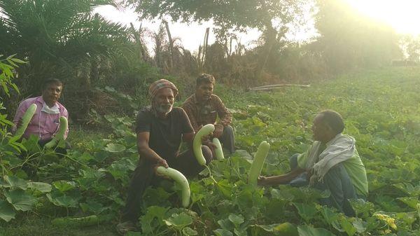 जखनी गांव में धान, गेहूं और दालों के अलावा छोटे किसान बरसाती नाली के पानी से मौसमी सब्जी उगाकर भी पैसा कमाने लगे हैं।