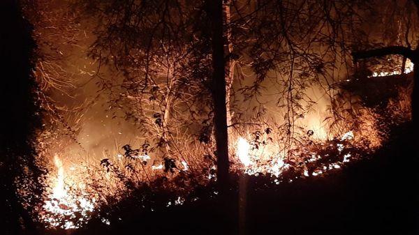 माही कॉलोनी के पीछे जंगल में लगी आग।