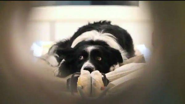 આ પહેલી વખત નથી કે જ્યારે એક પાળતુ જાનવરના માલિકે પોતાના મોત બાદ પોતાના ભાગ્યશાળી કૂતરા માટે કરોડો રૂપિયા છોડ્યા હોય
