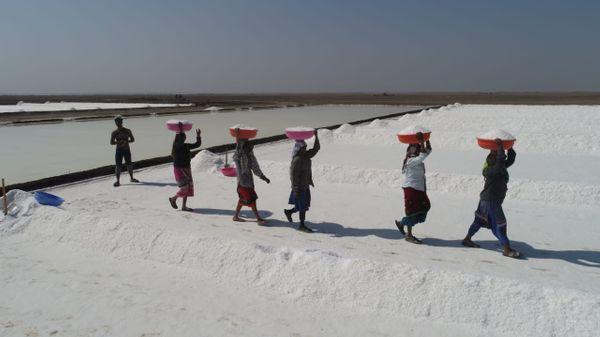 રણમાં મીઠું પકવતા અગરિયાઓ