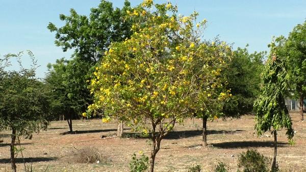 વન-ઉપવન, ધરતી પર વાવીએ વૃક્ષોના વન.....નું સુત્ર દામજીબાપાએ આપેલ