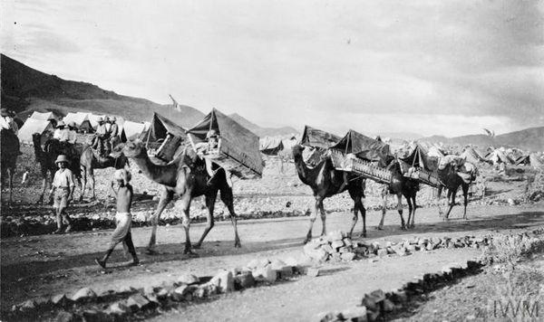 ऊंट घायल सैनिकों को ले जाते थे (फाइल फोटो)
