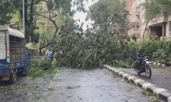 पेड़ गिरने से मार्ग अवरुद्ध