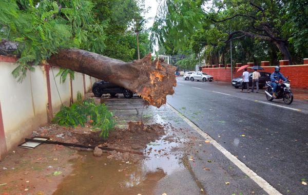 झारखंड की राजधानी रांची में यास तूफान के असर से तेज हवाएं चलीं। इससे कई पेड़ उखड़ गए।