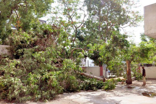 ગતરાત્રે સમગ્ર જિલ્લામાં પડેલા વરસાદના કારણે ક્યાંક વૃક્ષો પણ ધરાશાયી થવાના બનાવો બન્યા છે. નડિયાદમાં જિલ્લા શિક્ષણાધિકારી કચેરીના કેમ્પસમાં આવેલ એક ઘટાદાર વૃક્ષ જમીનદોસ્ત થયું છે. આ બનાવમાં કોઈ જાનહાનિ સર્જાઈ નહોતી.