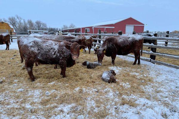 बर्फ पड़ने के कारण कई इलाकों में बिजली गुल है और इन्हें पानी भी मुहैया कराना मुश्किल हो रहा है।